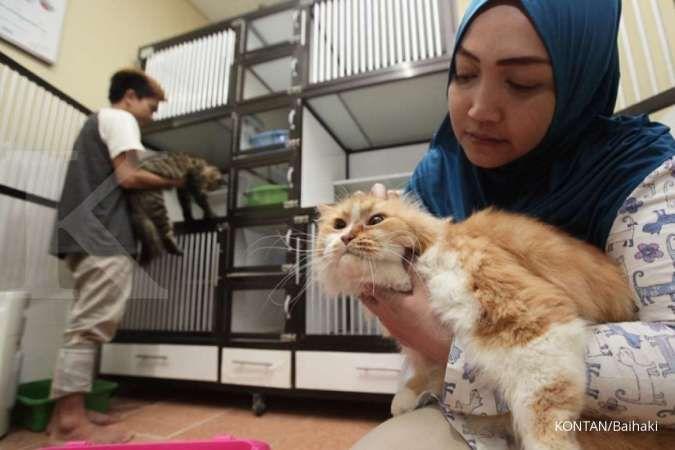 Cara meningkatkan nafsu makan kucing yang mudah untuk dilakukan