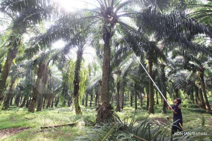 Ini 5 miliarder Indonesia yang kaya raya berkat sawit