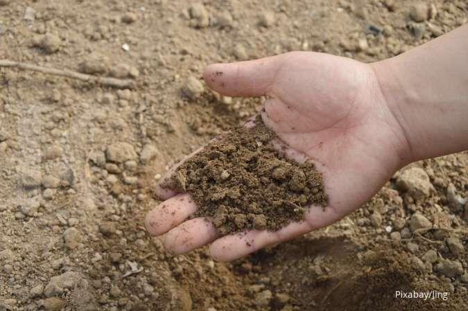 Media Tanam Selain Tanah dari Organik dan Anorganik
