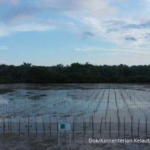 Cegah Abrasi, KKP Tanam Ratusan Ribu Mangrove di Sumenep