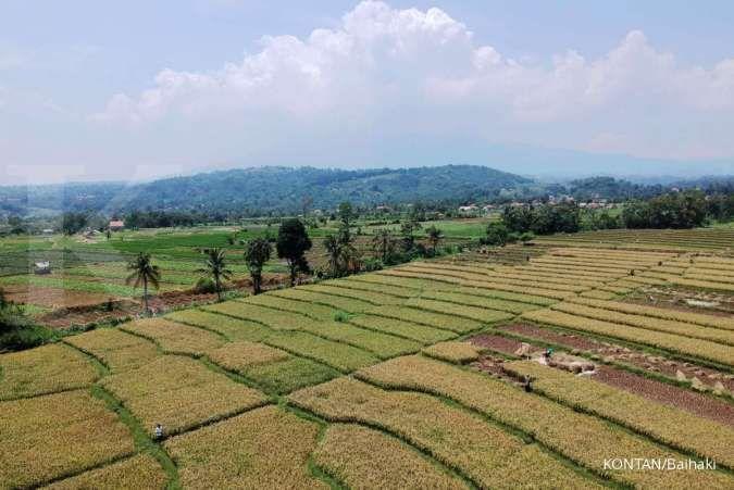 Kementerian Pertanian (Kementan) menargetkan produksi beras pada musim tanam (MT) I yang berlangsung pada Oktober 2020 hingga Maret 2021 akan menghasilkan 20 juta ton beras pada Januari hingga Juni 2021.