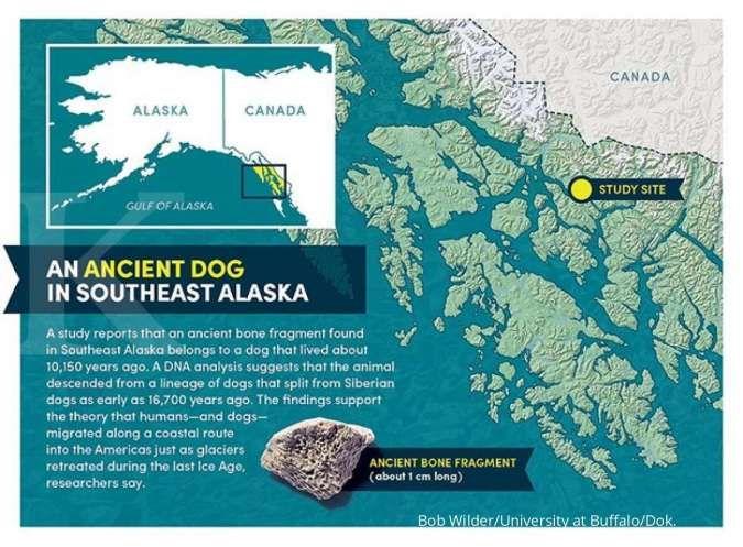 Penemuan bagian tulang Anjing domestik tertua di Amerika