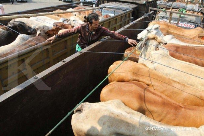 Bulog jajaki peluang pasar sapi dari NTT