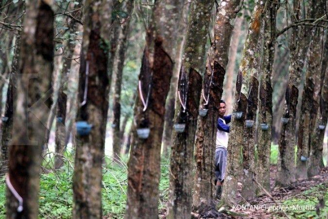 Sumsel target peremajaan 1.600 ha kebun karet