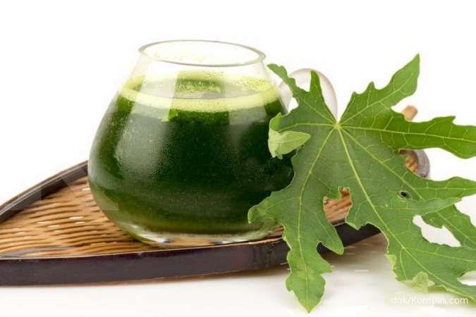 9 Manfaat daun pepaya untuk kesehatan yang jarang diketahui
