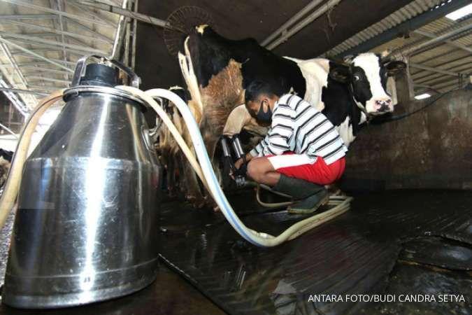 Ternyata tidak semua susu sama, susu sapi A2 bisa meningkatkan imunitas tubuh
