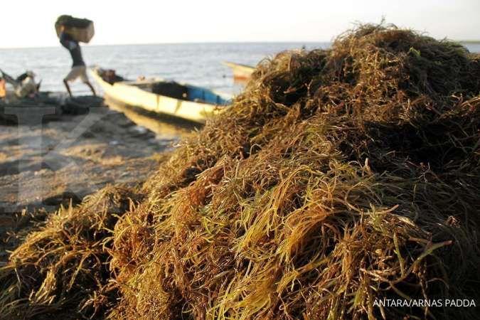 7 Manfaat rumput laut yang menakjubkan