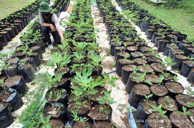 Sektor pertanian memiliki peluang ekspor yang menjanjikan ...