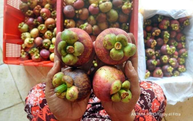 Fakta nutrisi manggis yang menjadikannya sebagai buah super