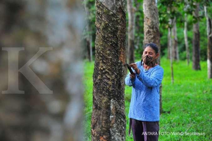 Kemtan bikin pengendalian penyakit gugur daun karet di tiga provinsi