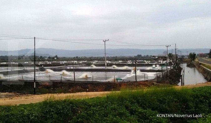 Proyeksi ekspor udang CP Prima 15% dari pendapatan