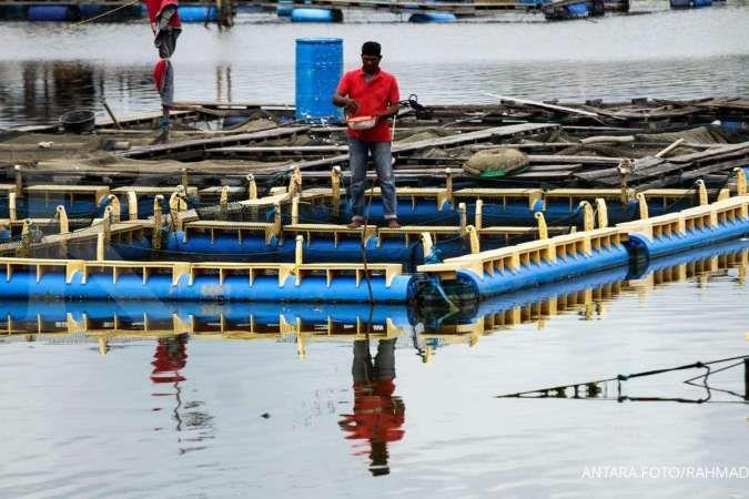 Perikanan Indonesia ekspor perdana gurita hasil tangkapan nelayan Simeulue ke Jepang