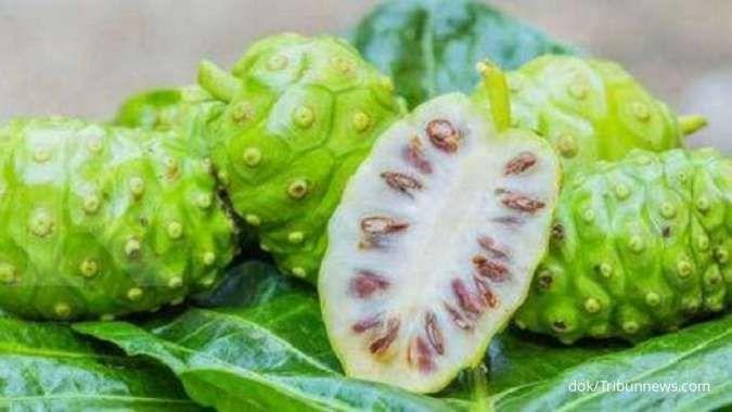 Buruk rupa dan beraroma khas, ini 4 manfaat buah mengkudu sebagai obat herbal