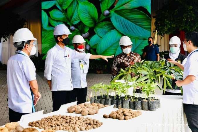 Tinjau pabrik porang, Jokowi minta pengusaha tak ekspor dalam bentuk mentah