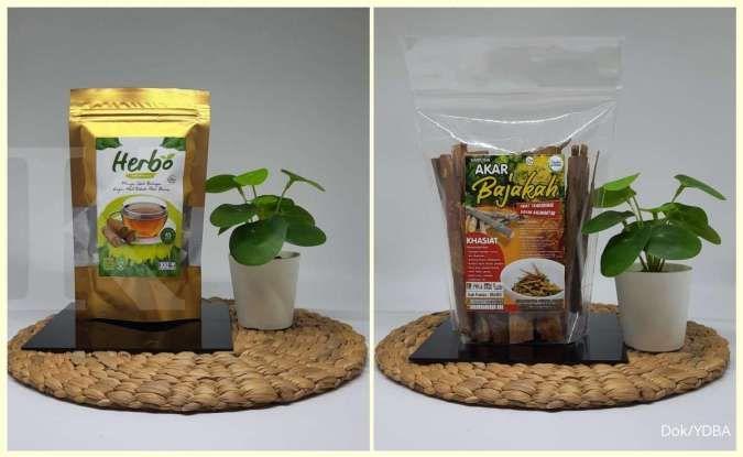 Herbal Borneo meracik cuan dari produk herbal teh bajakah