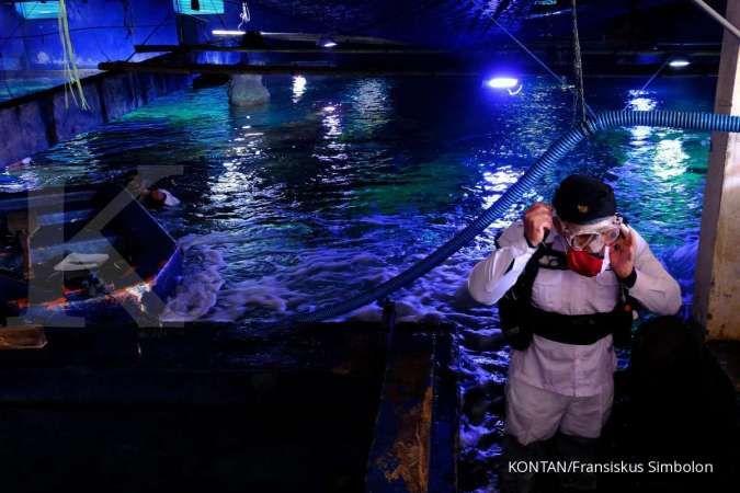 Harga tiket masuk Sea World Ancol periode 1-30 September 2020, cocok untuk liburan