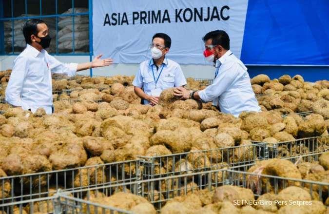 Jokowi tinjau pabrik porang, tumbuhan liar yang buat petani jadi miliarder