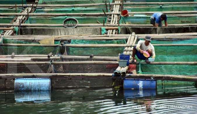 Pekerja memberi pakan ikan di karamba apung. ANTARA FOTO/Arif Firmansyah/aww.