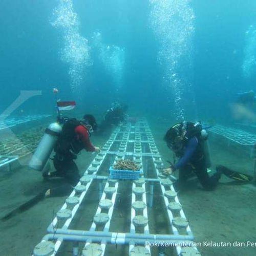 Dukung Pemulihan Laut, Coral Stock Center di Manado Diperluas