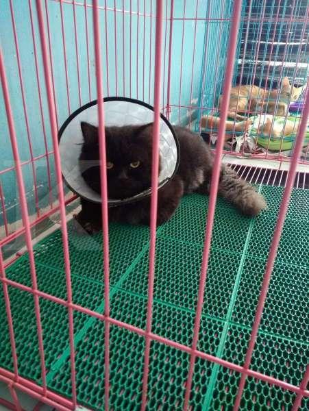 Kucing stelah sterilisasi