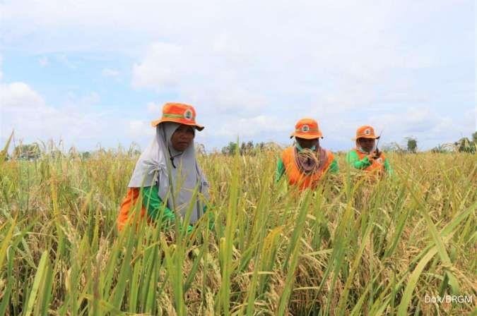 Petani didorong manfaatkan lahan gambut tanpa membakar