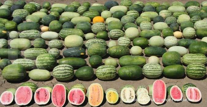 Inilah 11 buah-buahan penurun berat badan, pas dikonsumsi jika sedang diet karbo