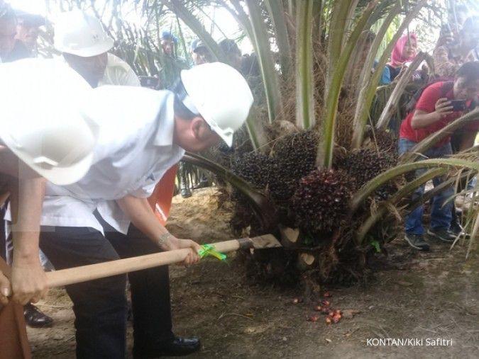 KUD Mulus Rahayu di Riau panen perdana lahan sawit seluas 310 hektar