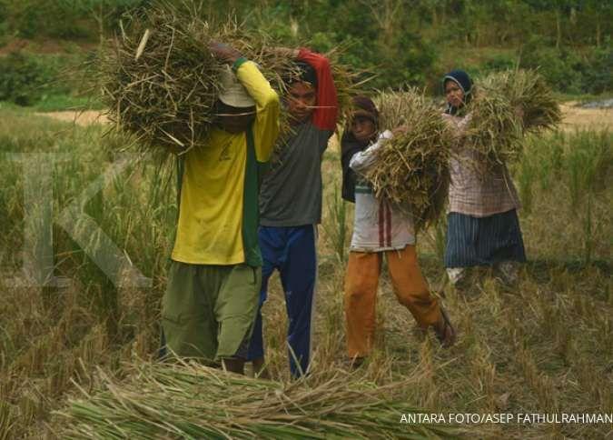 Pemerintah diminta antisipasi penurunan mutu gabah selama La Nina