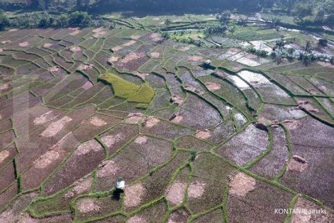 Bappenas usul lahan baku sawah dijadikan wakaf untuk cegah alih fungsi lahan