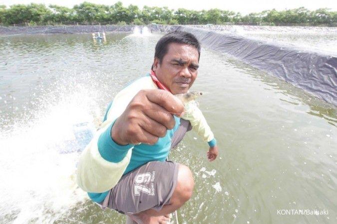 Minimalisir kerugian petambak, Jasindo luncurkan asuransi udang dan ikan