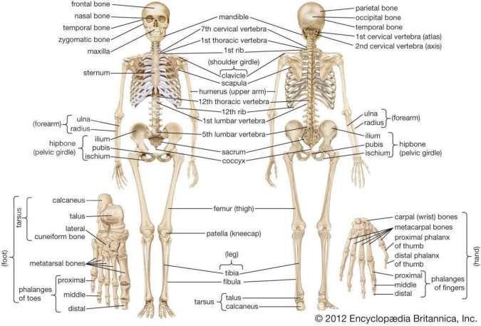 Kanker tulang, penyakit langka di dunia, kenali gejala dan cara deteksinya