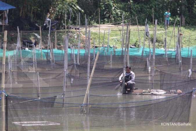 Perikanan budidaya jadi incaran investastor asing untuk berinvestasi di Indonesia