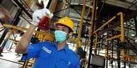 Tahun 2021, Dharma Satya Nusantara (DSNG) Rogoh capex Rp 1 Triliun