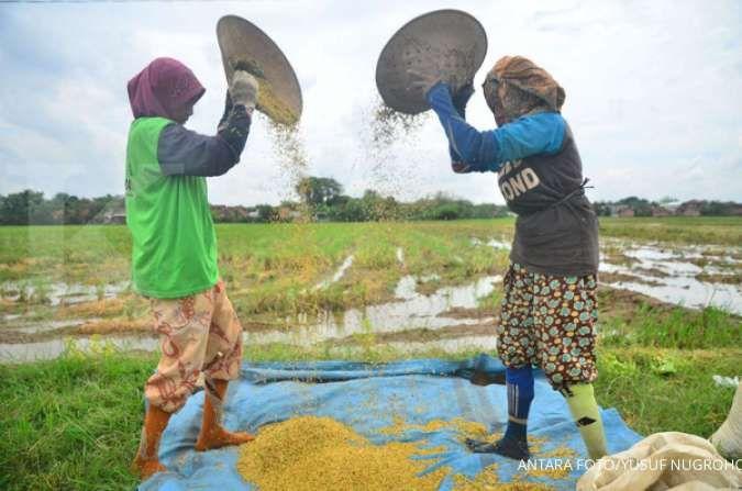 Sektor pertanian jadi andalan untuk mendongkrak pertumbuhan ekonomi tahun ini