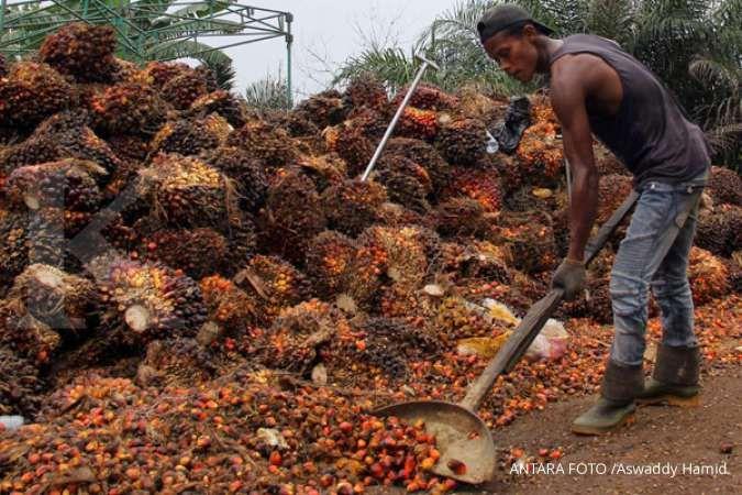 Pungutan ekspor CPO akan diturunkan, simak efeknya ke emiten menurut analis