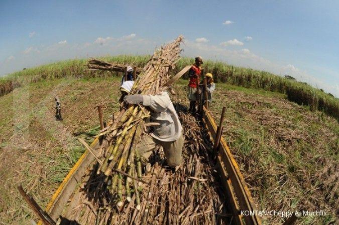 Petani sebut Permenperin nomor 3/2021 bisa tingkatkan kontrol dan pengawasan gula