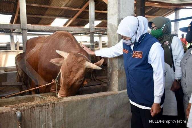 Penjualan hewan kurban di Jatim sudah online dan cashless, hasilnya laris manis