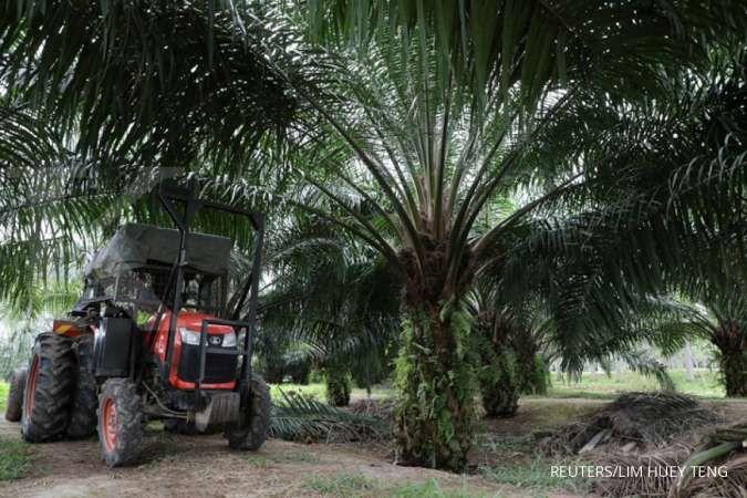 Akhiri aksi boikot, India kembali beli CPO dari Malaysia