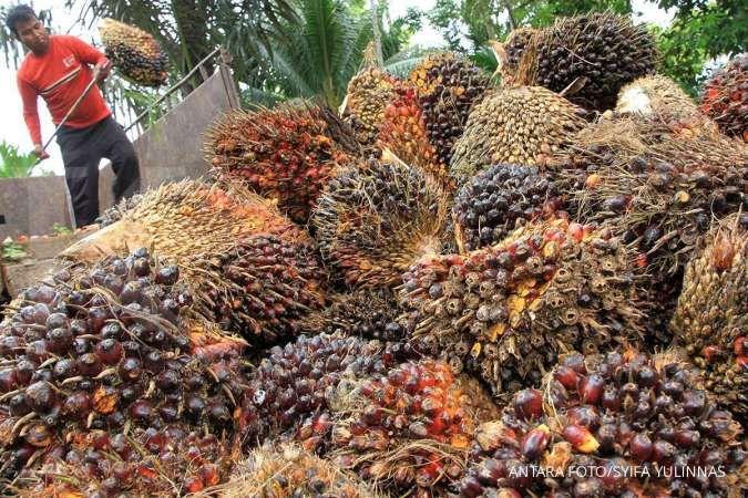 Ini berbagai kendala ekspor sawit Indonesia ke pasar Eropa