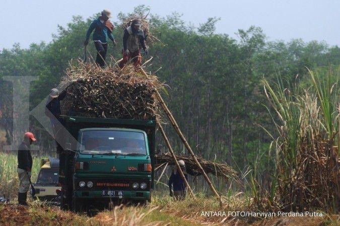 Petani tebu khawatir produksi gula tahun 2020 di bawah 2 juta ton