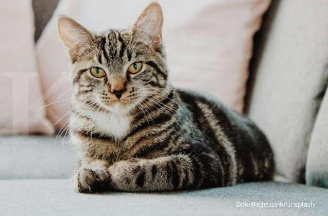 7 Tanda ini menunjukkan kucing merasa nyaman dan senang dengan sekitarnya