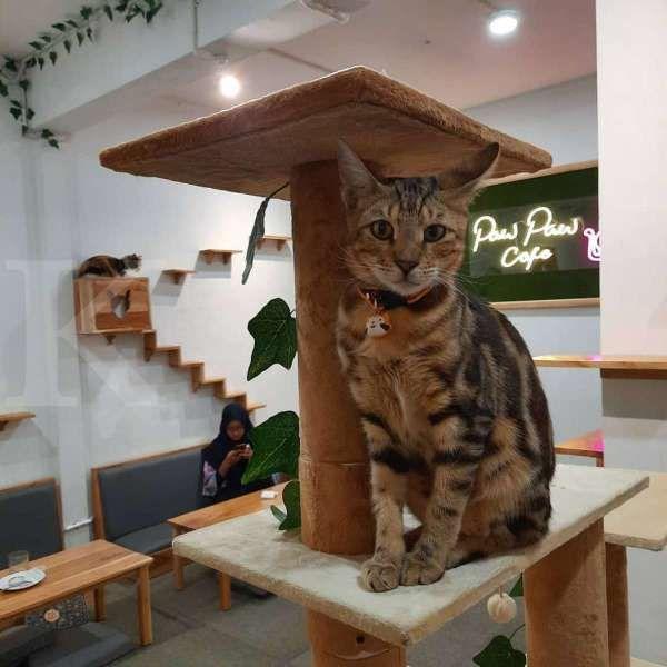 Serunya kulineran sambil bermain bersama kucing di Paw Paw Cafe, ini tiket masuknya