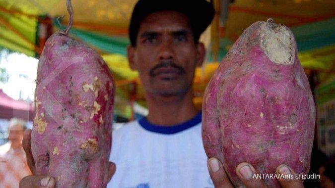 5 Manfaat ubi ungu yang lezat dan kaya nutrisi