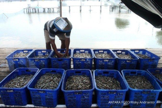 Wabah virus corona tak menyurutkan Perum Perindo genjot ekspor gurita ke Jepang