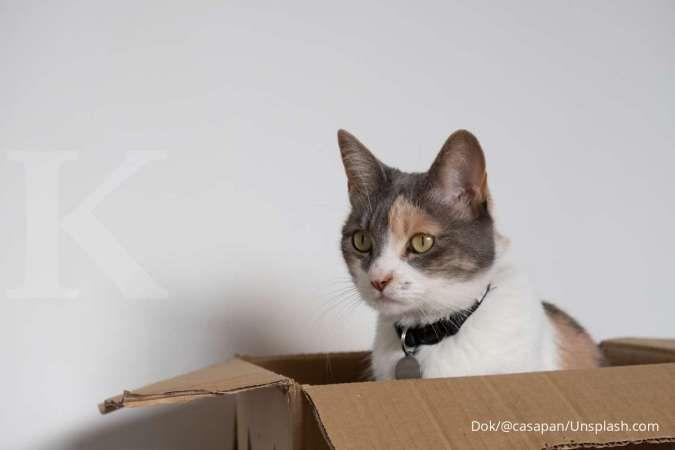 Beberapa alasan kenapa kucing senang masuk dan bersembunyi di kardus atau kotak.