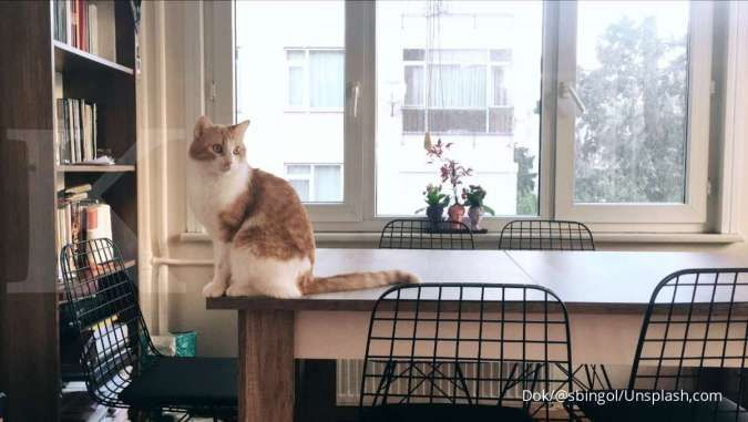 Inilah 6 alasan kucing sangat disukai sebagai hewan peliharaan favorit