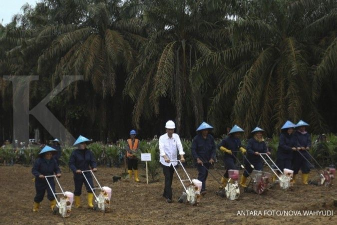 Jokowi kicks off oil palm tree replanting program