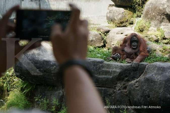 Long weekend tiba, ini harga tiket masuk kebun binatang Gembira Loka Yogyakarta