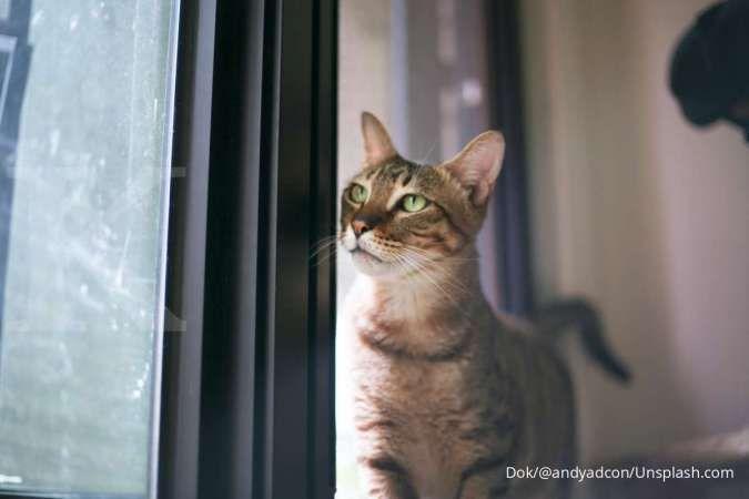 6 Hal yang harus Anda siapkan sebelum memelihara kucing di rumah