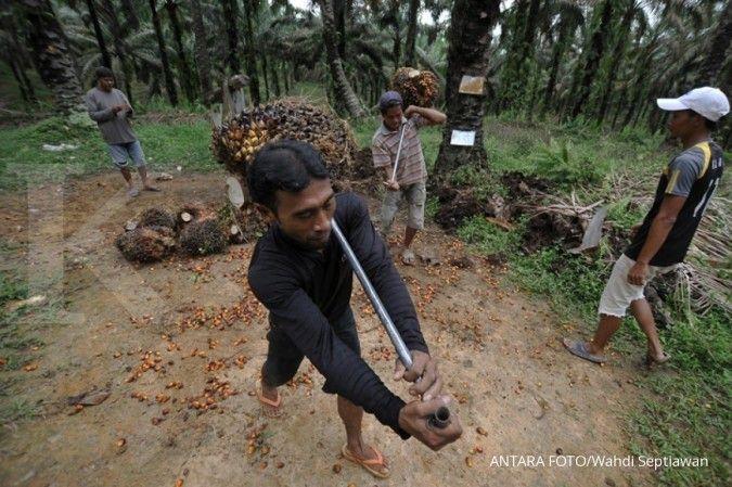 Harga TBS lokal naik, potongan harga beli dari pabrik kelapa sawit ikut terkerek